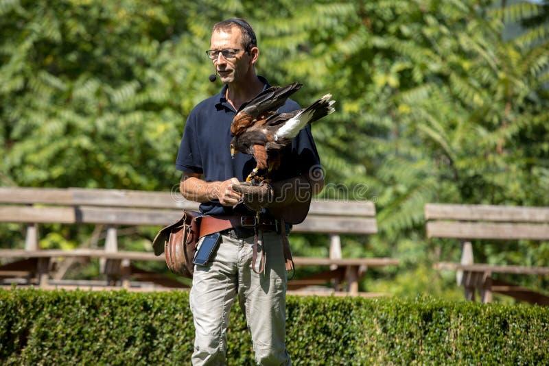 De show van roofvogels in Chateau des Milandes; een kasteel; in Dordogne; Aquitaine; Frankrijk stock foto's