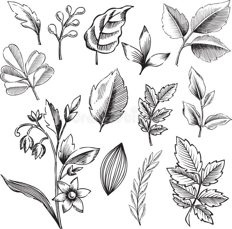 De sier VectorIllustratie van Bladeren royalty-vrije illustratie