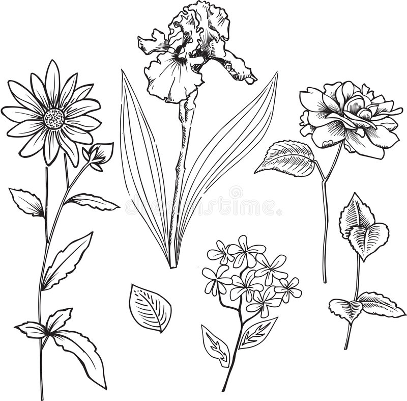 De sier VectorIllustratie van Bloemen vector illustratie