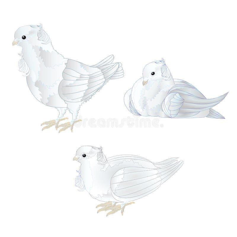De sier witte duiven leuke kleine vogels plaatsen op een witte uitstekende vector editable illustratie als achtergrond vector illustratie