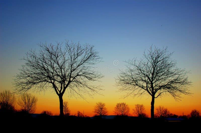 De silhouetten van de boom stock afbeelding