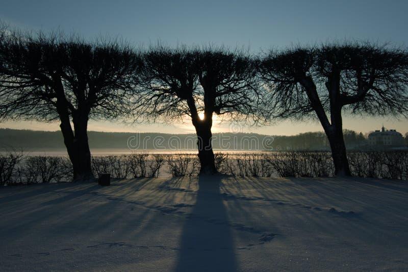 De silhouetten van de boom stock foto's