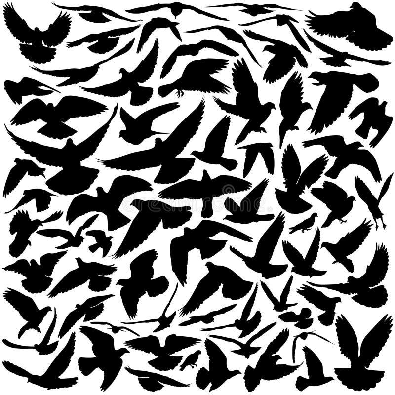 De silhouetten van de duif stock illustratie