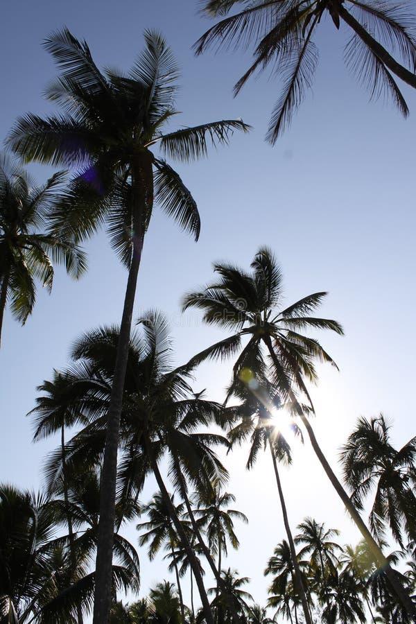 De silhouetten van de palm royalty-vrije stock foto's