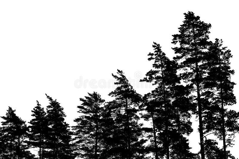 De silhouetten van de pijnboomboom op wit worden geïsoleerd dat royalty-vrije stock afbeelding