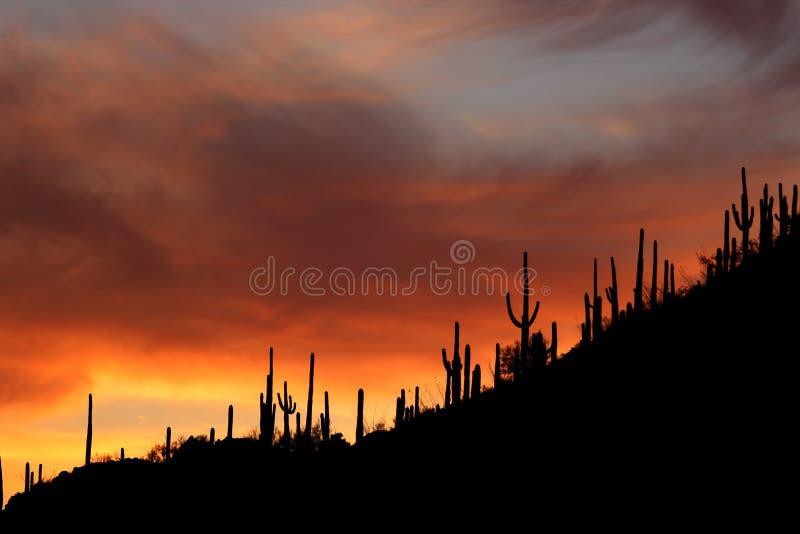 De Silhouetten van de Zonsondergang van Arizona Saguaro royalty-vrije stock afbeeldingen