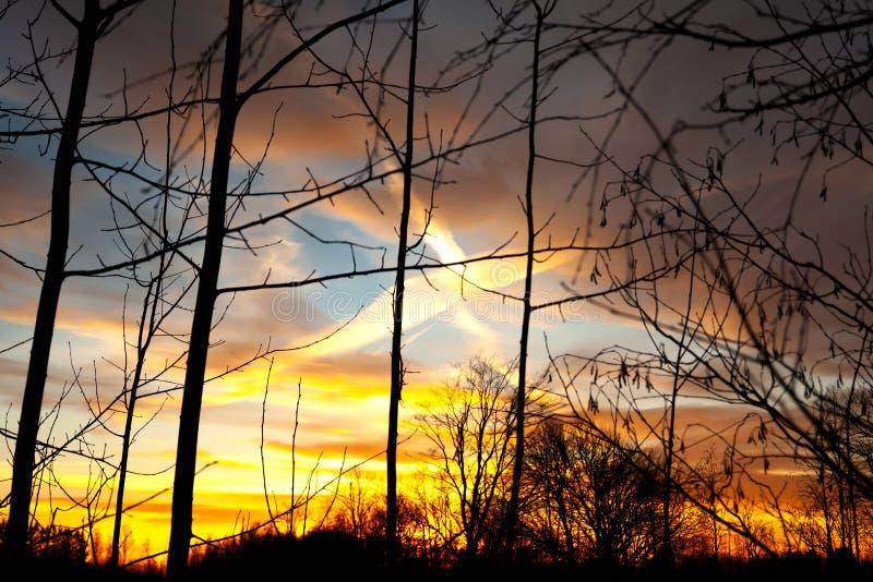 De silhouetten van een leafless boomtakken op kleurrijke zonsondergang en bewolkte blauwe hemel met vliegtuig slepen als backgron stock foto