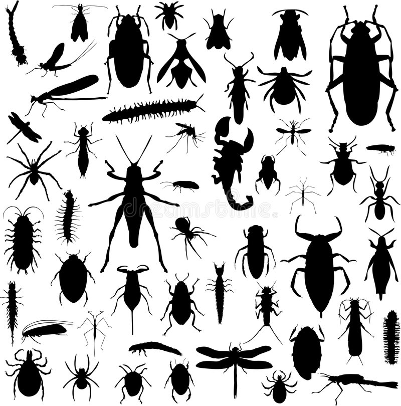 De silhouetten van het insect royalty-vrije stock fotografie