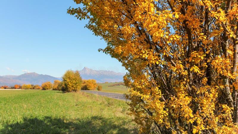 De sinaasappel kleurde de herfstboom naast groen gebied, opzet het Slowaakse symbool van Krivan met duidelijke hierboven hemel, i stock foto's