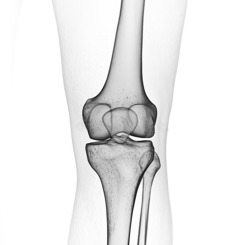 De skeletachtige knie royalty-vrije illustratie