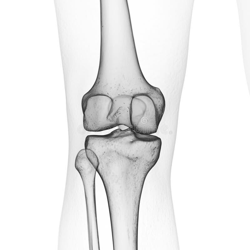 De skeletachtige knie vector illustratie