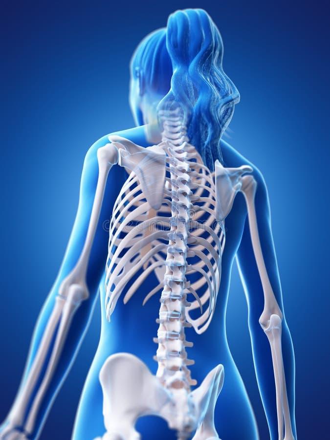 De skeletachtige rug van een vrouw royalty-vrije illustratie