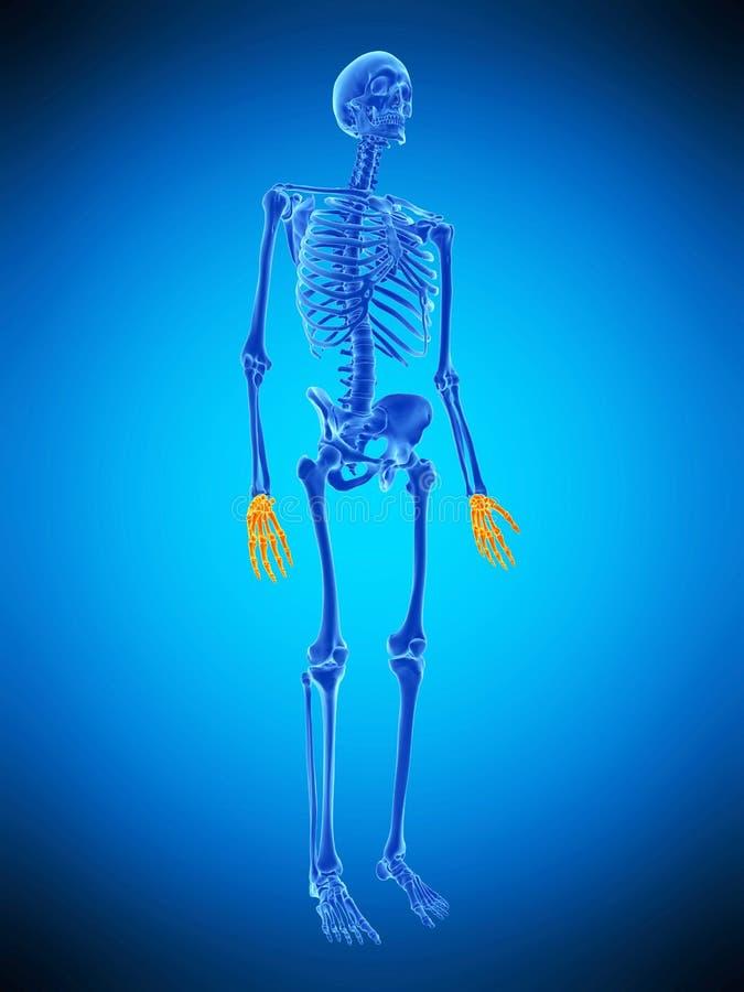 De skelett- händerna royaltyfri illustrationer