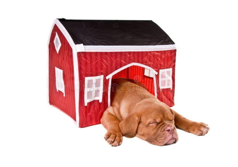 De slaap van de hond in een huis stock foto's