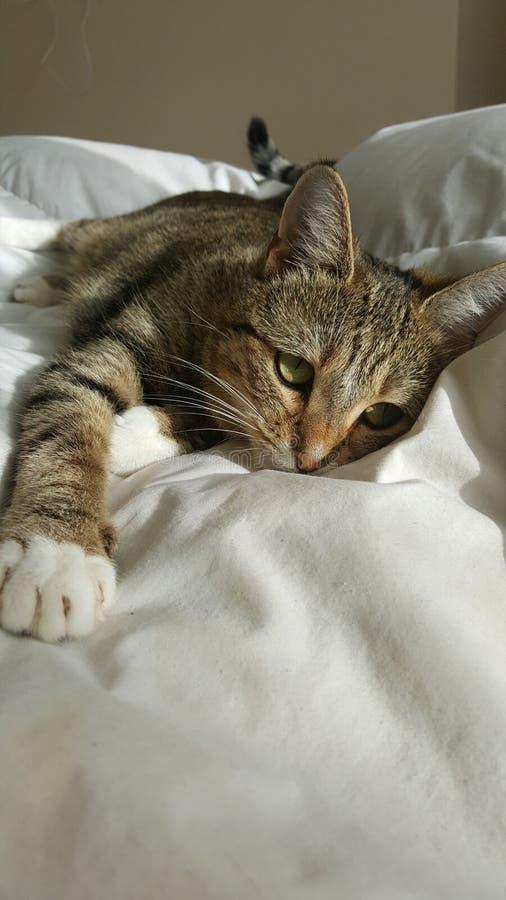 De slaap van de huisdierenkat op bed royalty-vrije stock fotografie