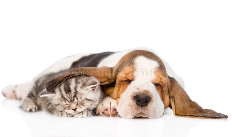 De slaap van het gestreepte katkatje, behandeld oorbasset hondenpuppy Geïsoleerde stock afbeelding