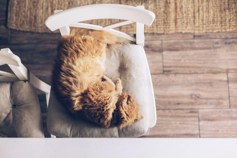 De slaap van de kat op een stoel royalty-vrije stock afbeelding