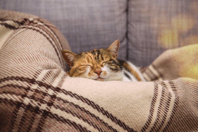 De slaap van de richtsnoerkat op deken stock fotografie