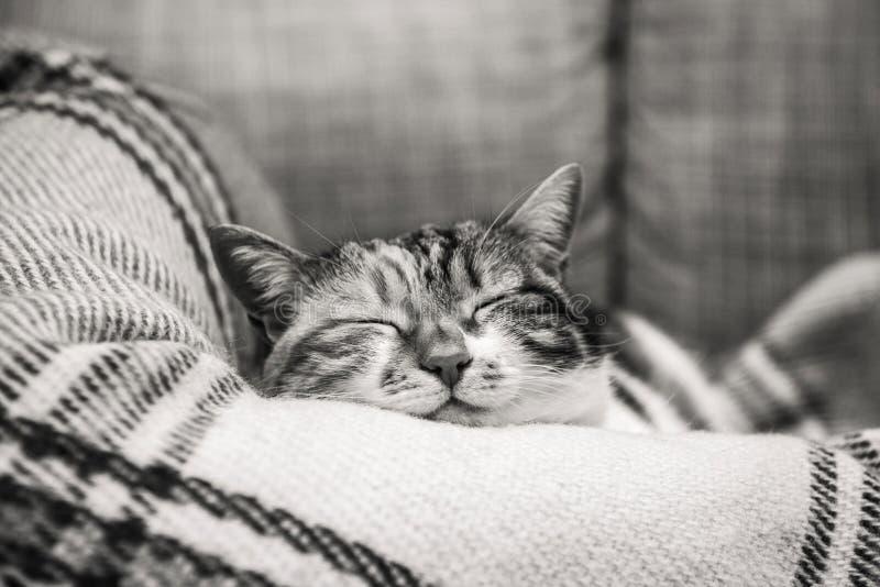 De slaap van de richtsnoerkat op deken stock afbeelding