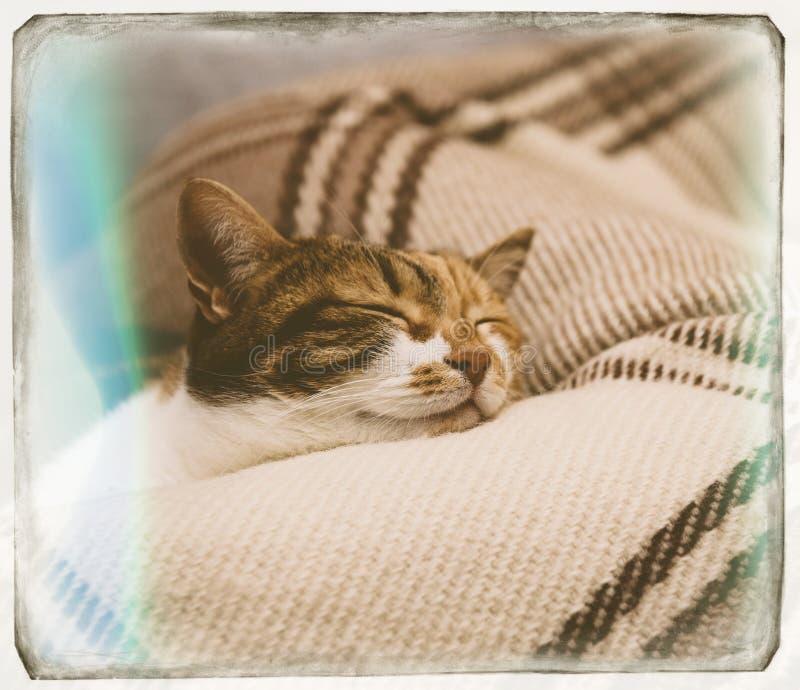 De slaap van de richtsnoerkat op deken stock foto
