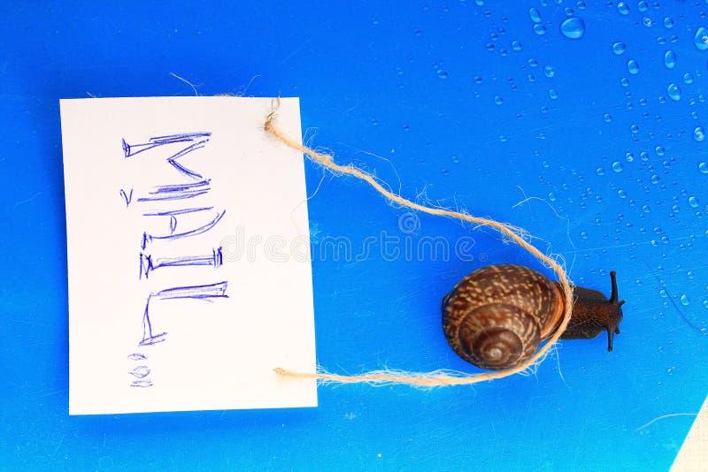 De slak draagt weinig brief stock fotografie