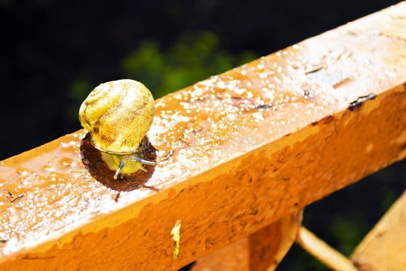 De slak kruipt na regen royalty-vrije stock fotografie