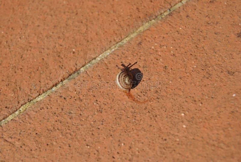 De slak verlaat wat slijm op cottotegels in mijn tuin royalty-vrije stock foto