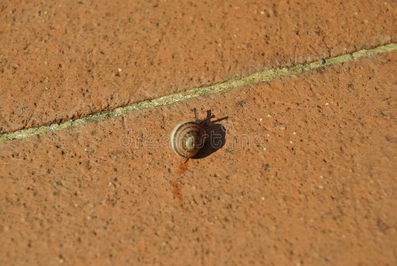De slak verlaat wat slijm op cottotegels in mijn tuin stock fotografie