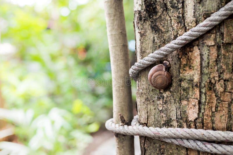 De slakken beklimmen op de boom toont de overvloed van natuurvoedingketens Slak op de boom in de tuin Slak die op nat glijden stock foto