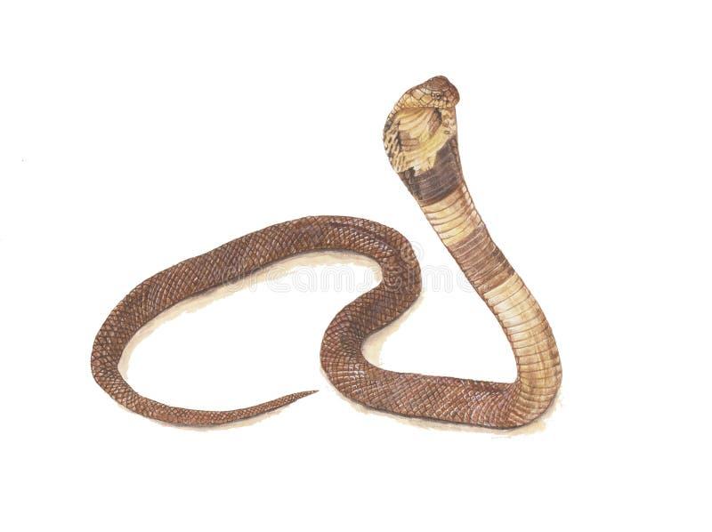 De Slang van de cobra royalty-vrije stock foto