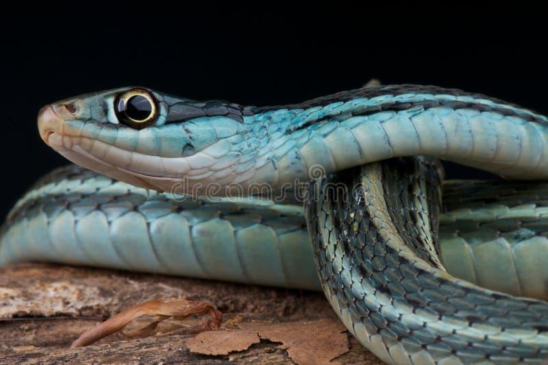 De slang van het lint stock afbeelding