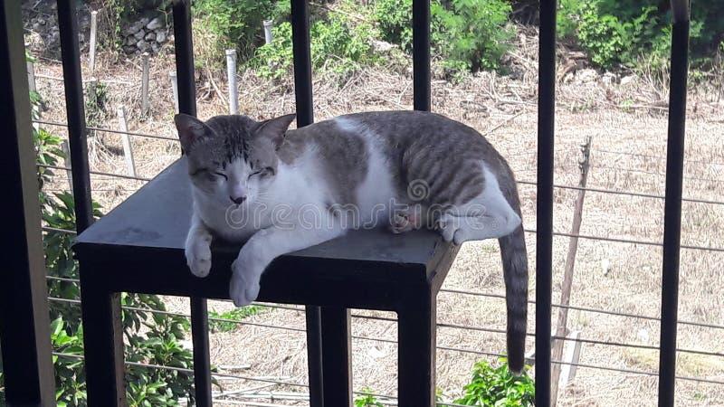 de slaperige kat wordt wakker royalty-vrije stock afbeeldingen