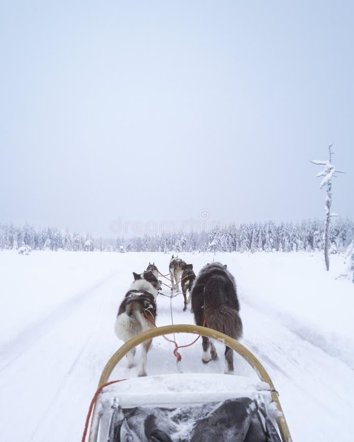 De sleehonden zijn het beste royalty-vrije stock fotografie