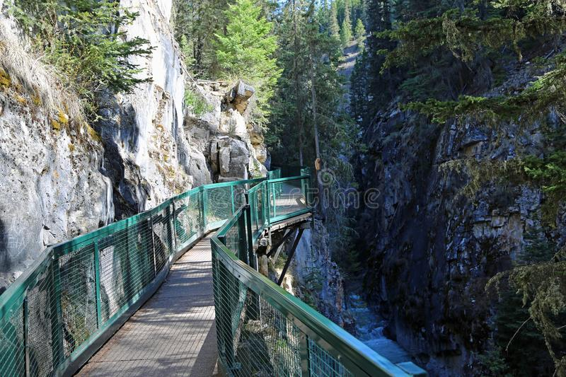 De sleep in Johnston Canyon stock fotografie