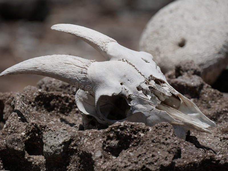 De sleep van de de lentebaai in Saba stock fotografie