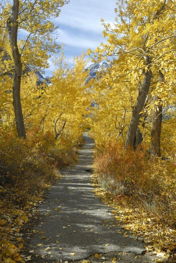 De sleep van de wandeling door espen in de herfst stock foto