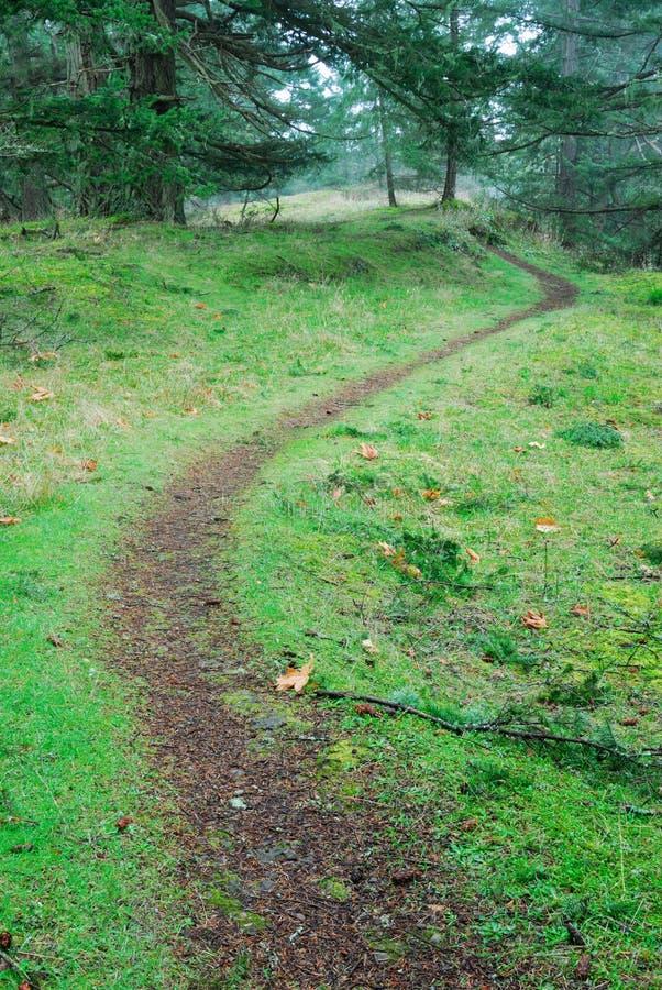 De sleep van de wandeling in regenwoud stock afbeelding