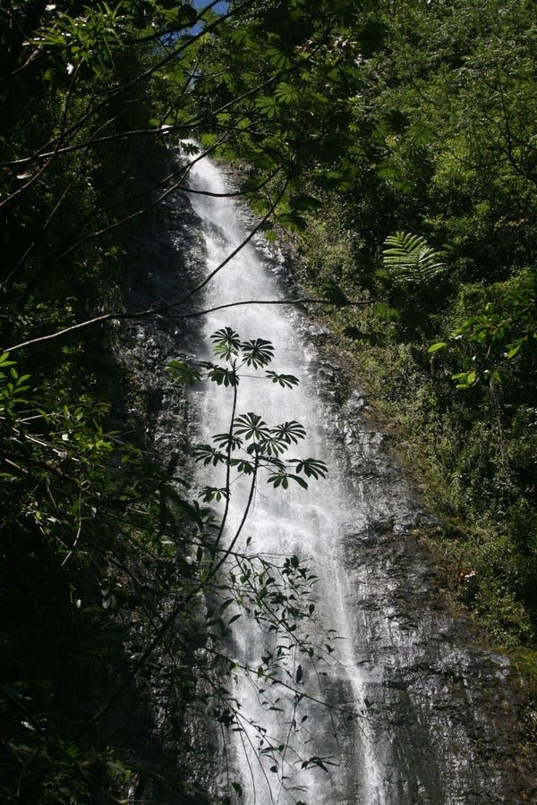 De sleep van Moanadalingen, Oahu, Hawaï stock fotografie
