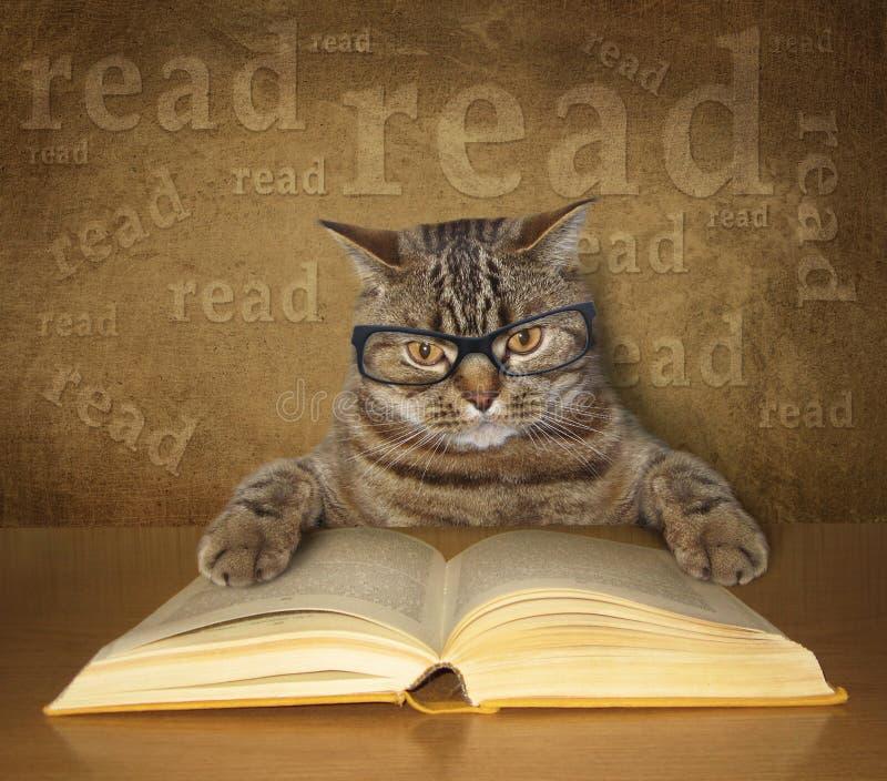 De slimme kat met glazen leest een boek royalty-vrije stock foto
