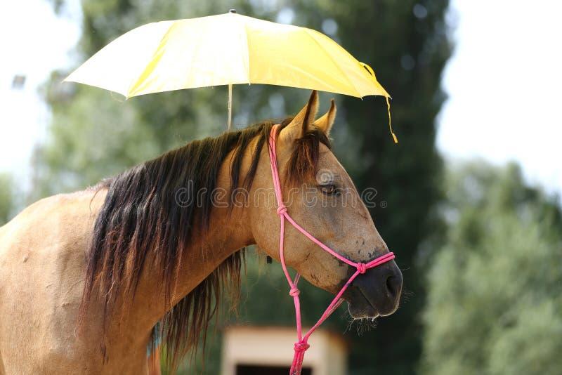 De slimme sportpaarden trekken de vrees van ` t voor paraplu's aan royalty-vrije stock afbeelding
