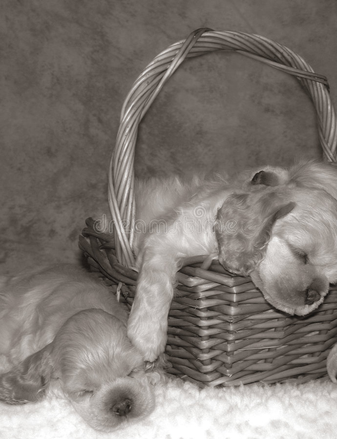 De sluimerpartij van het puppy royalty-vrije stock fotografie
