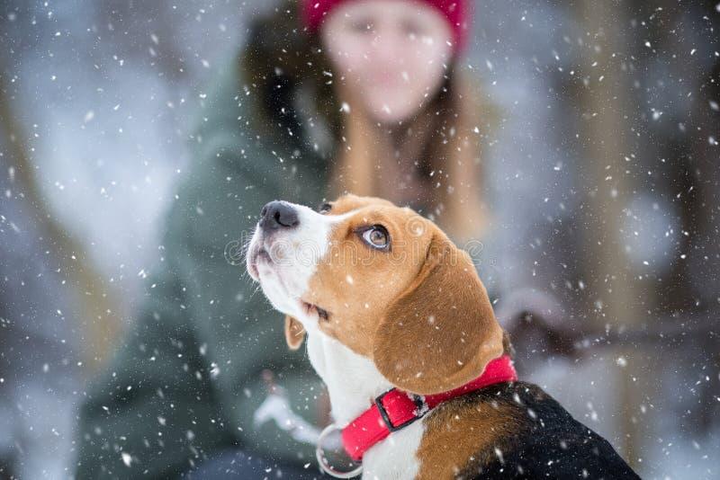 De sneeuw begint te vallen, hond omhoog kijkend royalty-vrije stock fotografie