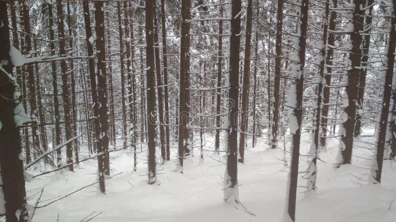 De sneeuw behandelde bos, ongelooflijke Karpaten royalty-vrije stock afbeeldingen