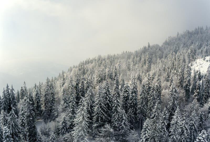 De sneeuw behandelde de winterbomen in het voorgrondkader een perfecte de winterscène aangezien een sneeuw alpiene berg piek bede royalty-vrije stock afbeelding