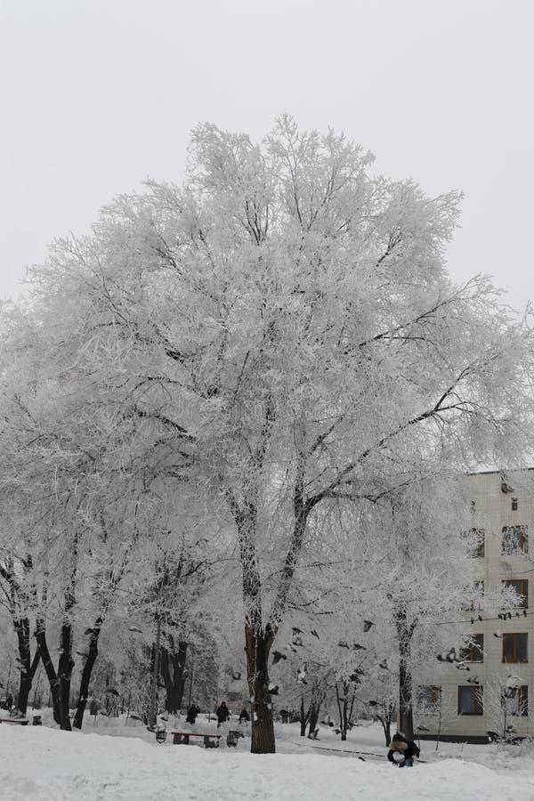 De sneeuw grote boom behandelde motregen kijkt zeer aardig stock afbeelding