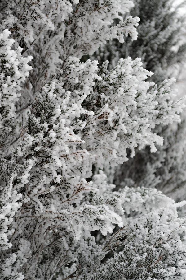 De sneeuw grote boom behandelde motregen kijkt zeer aardig royalty-vrije stock afbeelding