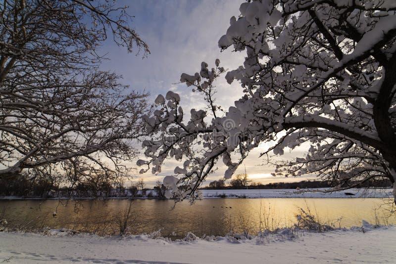 De sneeuw hangt op bomen na een onweer royalty-vrije stock foto