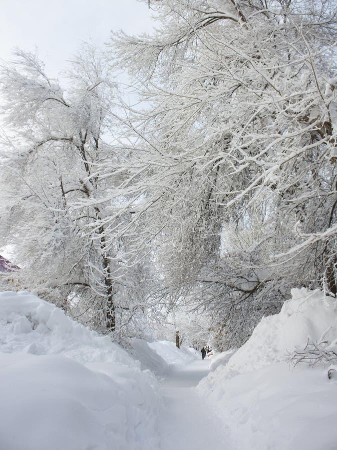 De sneeuw ruwe winter in de stad van Saratov, ijsafwijkingen royalty-vrije stock foto's