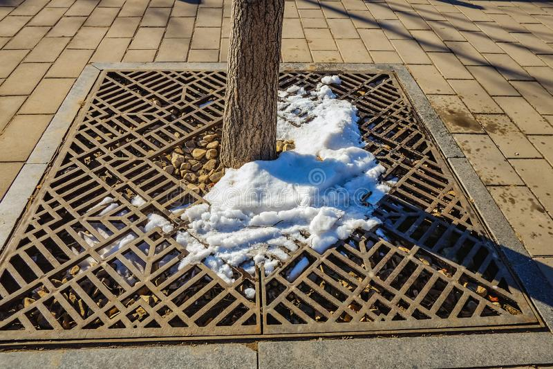 De sneeuw smelt van een boom wanneer de Lente komst in de stad van Peking heeft stock afbeelding