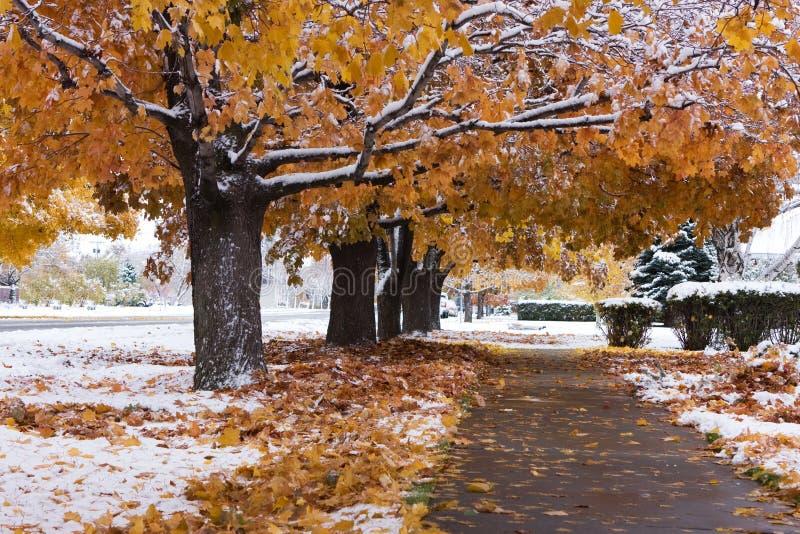 De Sneeuw van de herfst royalty-vrije stock foto's